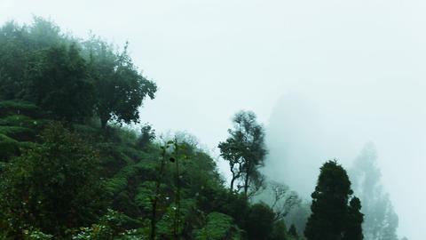 Clouds pass over mountains Green hillside with trees in cloud scraps Moving fog Footage