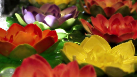 Soft focused decorative colorful water lilies floating on water GIF