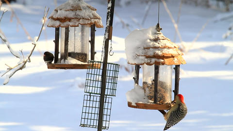 Birds On Feeders shows beautiful birds in the winter time Live Action