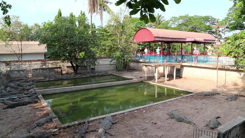 Crocodile farm in Cambodia Live Action