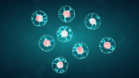 Mitosis, The Process Of Cell Division And Multiplication. Medicine Scientific Animation