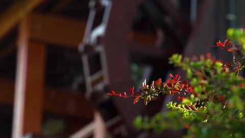Wooden water wheel. Beautiful background water mill. Wooden wheel Footage