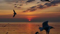 Seagulls Flying Above Sea At Sunset ビデオ