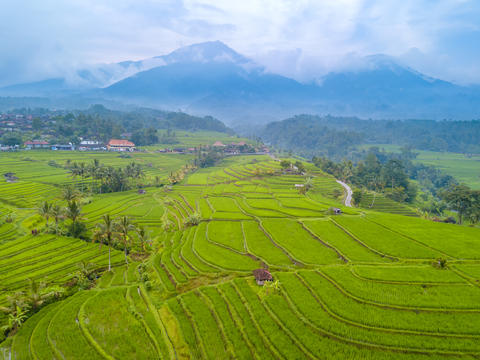 Rice Fields and Mountains after Rain. Aerial View Photo