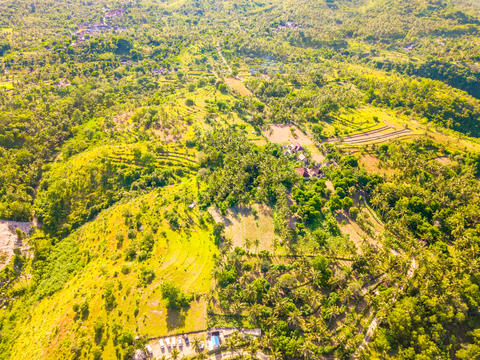BG with Rice Fields and Palm Groves. Aerial View Fotografía