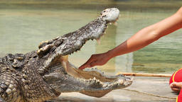 Man put his hand in crocodile's mouth. (Slow motion) Live Action