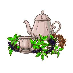 elderberry tea illustration Vector