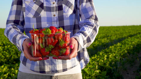 Woman in shirt hold plastic box full of strawberries ビデオ