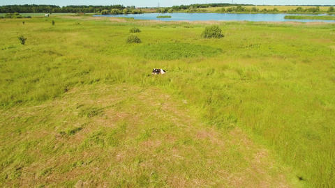 Amazing aerial landscape with green meadow, cow and blue lake ビデオ