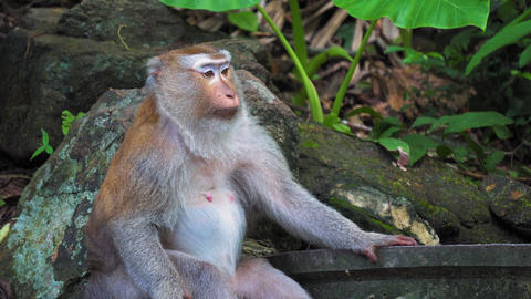 portrait of an adult monkey under a tree in a tropical jungle Live Action