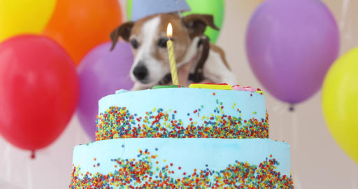 Cute dog with party hat and birthday cake Archivo