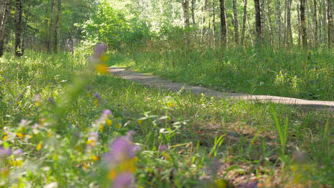 The athlete rides a bicycle through the forest on a beautiful sunny day Footage