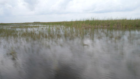 Wetlands seen from an airboat navigating Footage