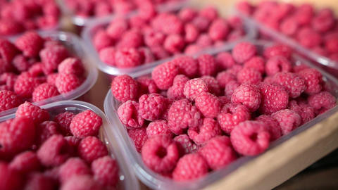 Closeup of red ripe summer raspberries. Closeup shot Live Action