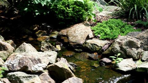 Garden waterfall. Garden pond with water flowers Footage