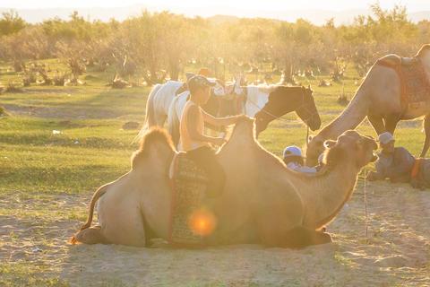 camel family Mongolian フォト