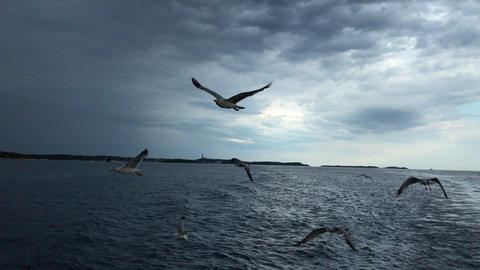Seagulls Flight over the sea 4K Archivo