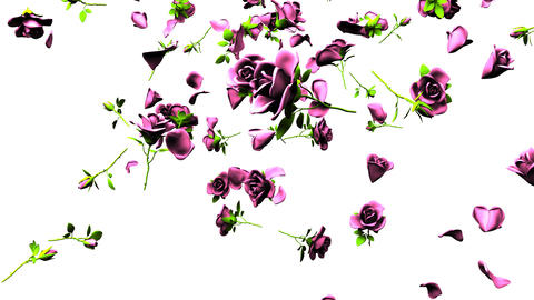 Falling Pink Roses On White Background CG動画