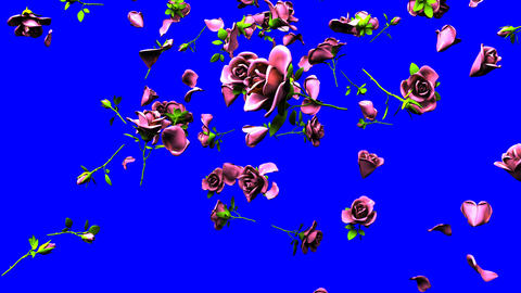 Falling Pink Roses On Blue Chroma Key Animation