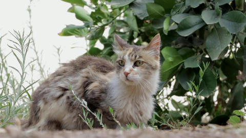 Cat feline animal pet house cat Footage