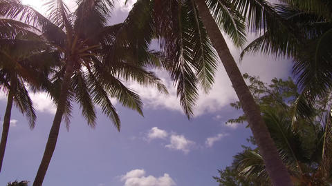 CocoCay Palm Beach GIF