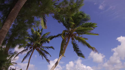 Palm Tree in Wind ビデオ