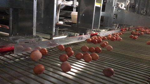 eggs are rolled on a conveyor belt Footage
