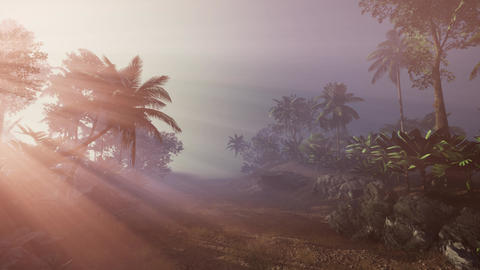 4k Amazing sunset at tropical palms landscape with palm trees ビデオ