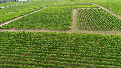 Vineyards in the Rheingau, Germany - aerial view Archivo