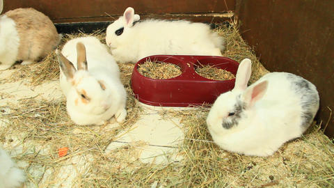 Brood of rabbits in zoo Footage