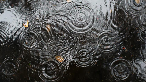 Rain drops rippling in a puddle on a dark, rainy day Footage