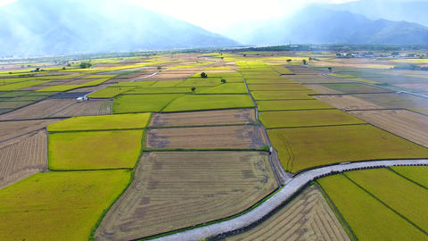 aerial view of rice field .Taiwan Live影片