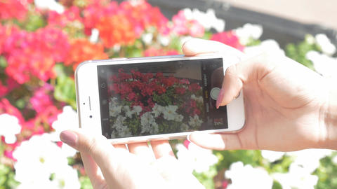 The girl is taking pictures of flowers on the phone. Beautifully decorated GIF