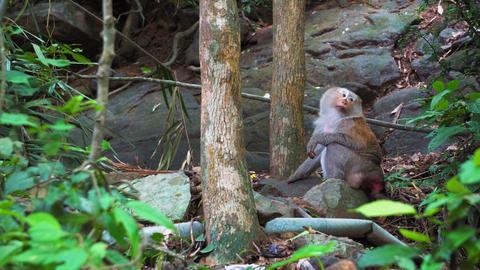 wild monkey goes into the jungle, natural habitat, wild animals Footage
