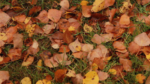 Yellow Leaves On The Ground stock footage
