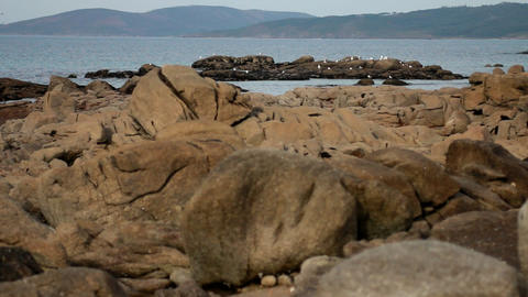 Seagulls on a rock near the sea in Galicia, Spain Stock Video Footage