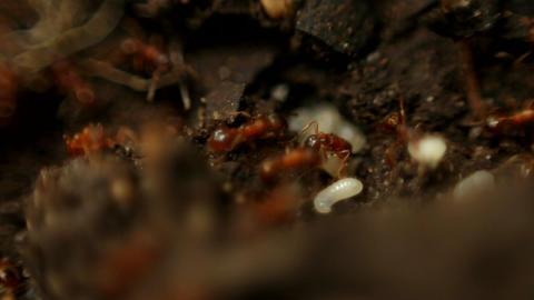 Ants – Macro Stock Video Footage