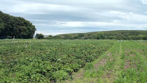 An Irish field in summer Footage