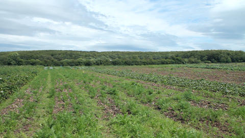 An Irish field in summer Stock Video Footage