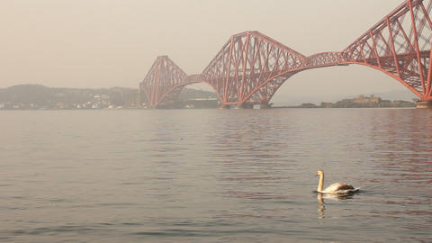 Swans with the Forth bridge behind Footage