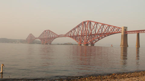 The Forth bridge, with swan swimming Stock Video Footage