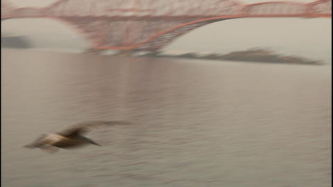 Seagull flying with the Forth bridge behind Stock Video Footage