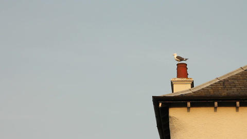Seagull waiting on roof top, then flying away Stock Video Footage