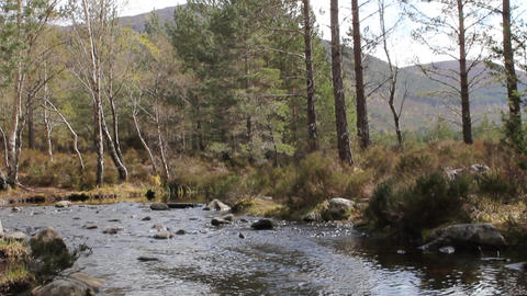 Stream of water in the woods Footage
