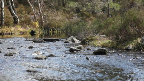 Stream of water in the woods Stock Video Footage