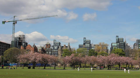 People preparing a cricket match in the park Footage