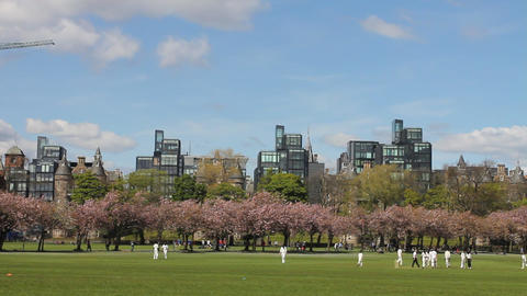 People preparing a cricket match in the park Stock Video Footage