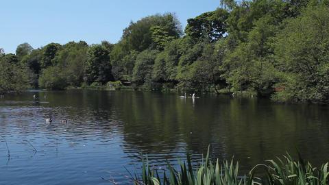A pond in a bird reserve in Edinburgh Stock Video Footage