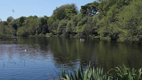 A pond in a bird reserve in Edinburgh Footage