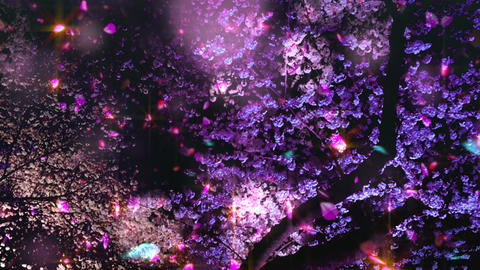 Cherry Blossoms 2625j Animation